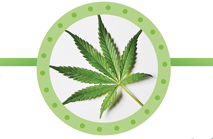 News image for Marijuana Tax Revenue fact sheet
