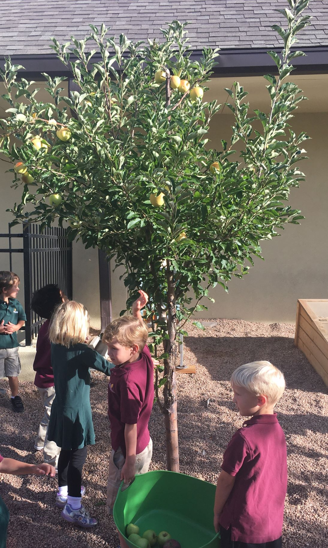 Aspen Prep Students Picking Apples at school