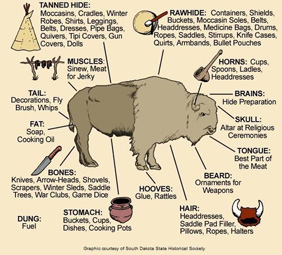 How Native Americans used all parts of a buffalo.