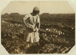 Child Cultivating Sugar Beets, 1915