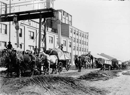 Horse Drawn Wagons Delivering Sugar Beets