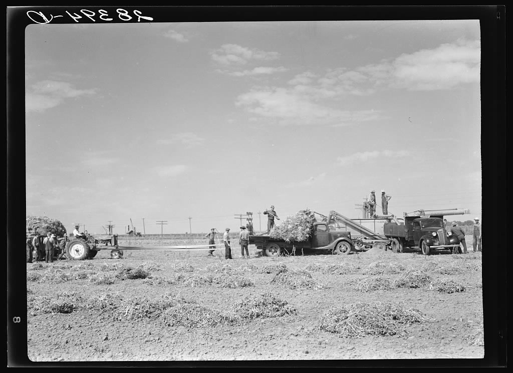 Threshing soybeans. Weld County, Colorado