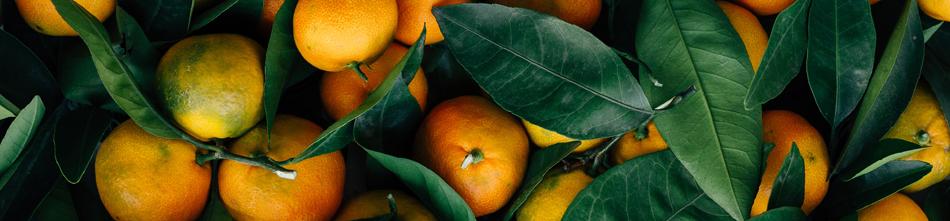 mandarin oranges and leaves