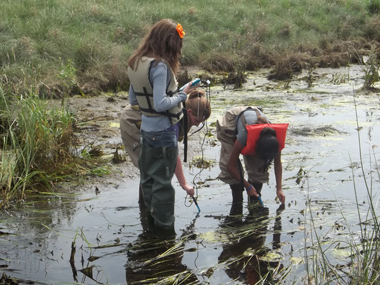 Students taking samples from a pond