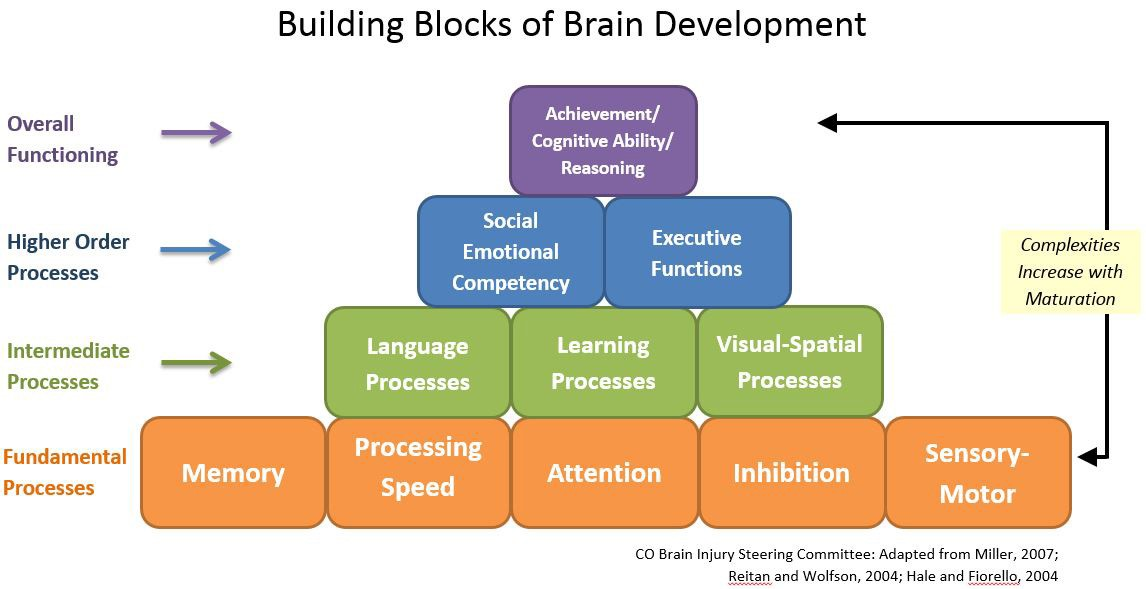 What Are The Four Main Building Blocks Of Life