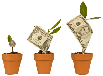 Potted plants growing money