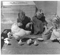 Kindergarten Children Playing With Chickens